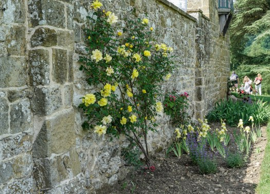 Chartwell wall flowers (1 of 1)