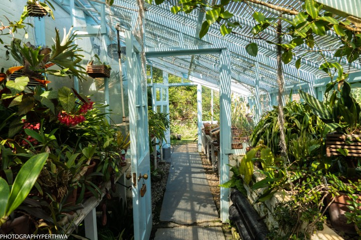greenhouse (1 of 1)