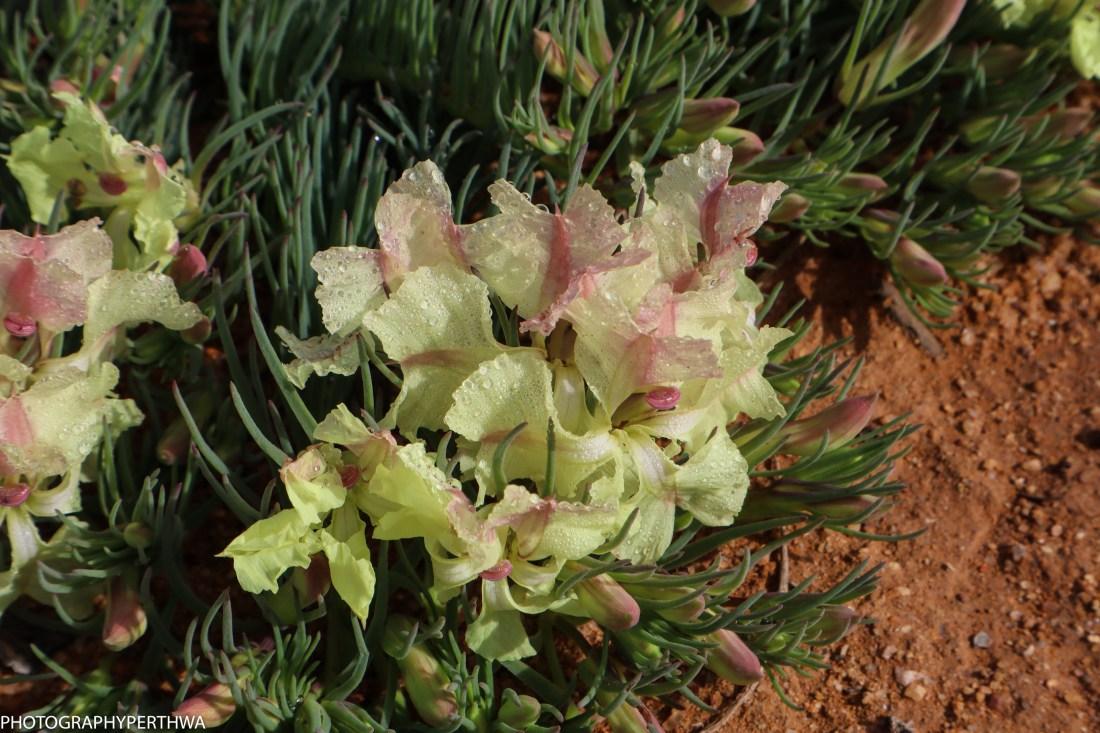 wreath flower detail (1 of 1)