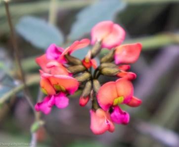 flowers7 (1 of 1)