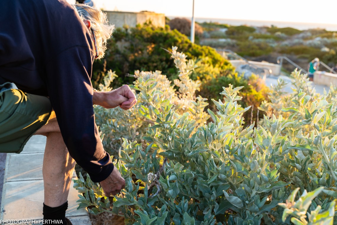 Mullaloo Beach Stephen and plant (1 of 1)