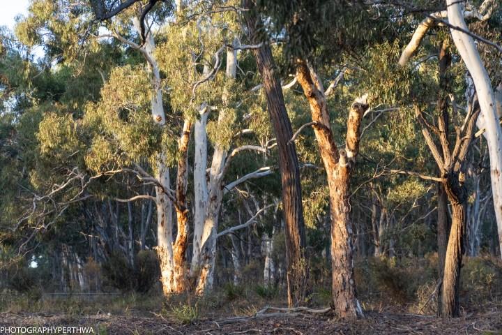 bush 2 (1 of 1).jpg