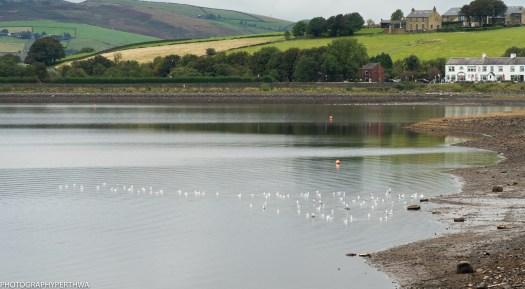 gulls (1 of 1)