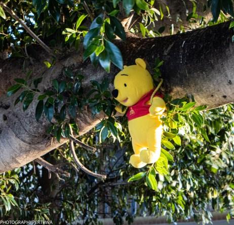 Pooh Bear (1 of 1)