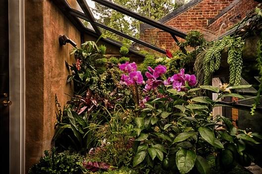 Georgetown_Garden_Plank_11