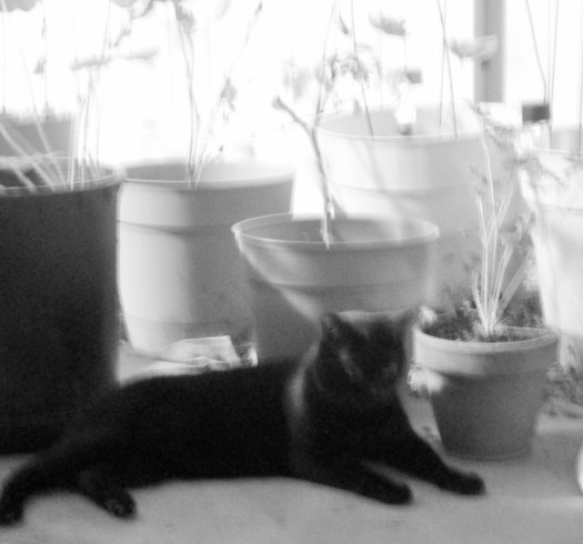 Here is a black and white photograph of Irina the cat sitting in the container garden.
