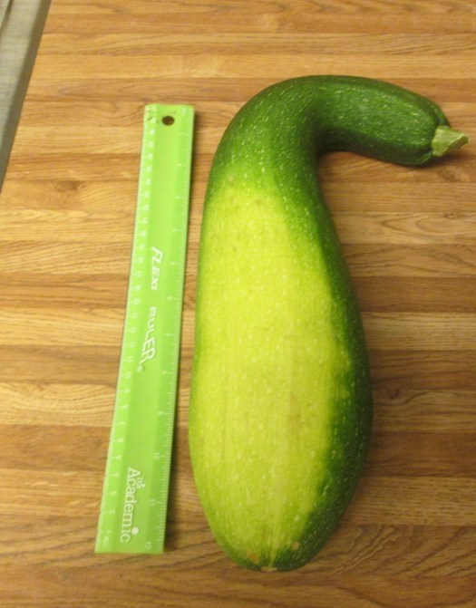 The zucchini is over a foot long.