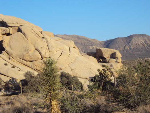 The tip of a Joshua tree with a large boulder formation in the distance.