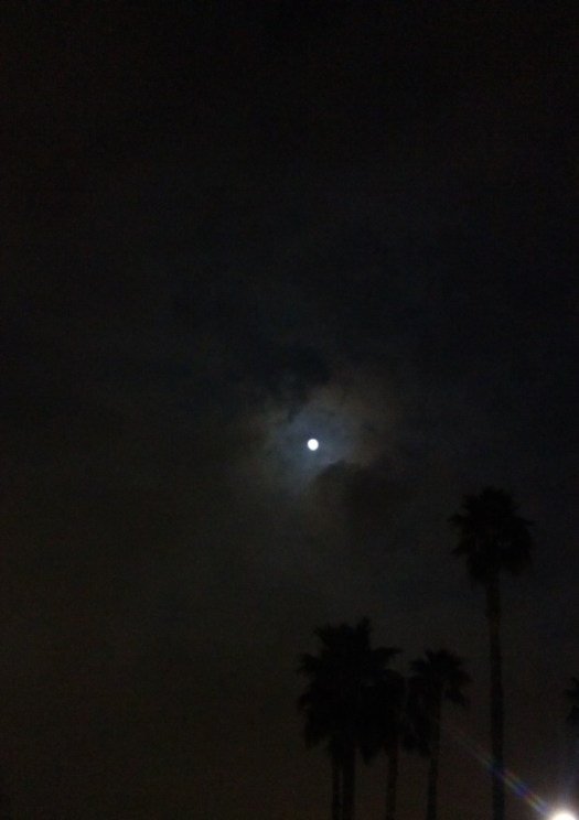 The full moon is peeking through the night sky with palm trees in the foreground.