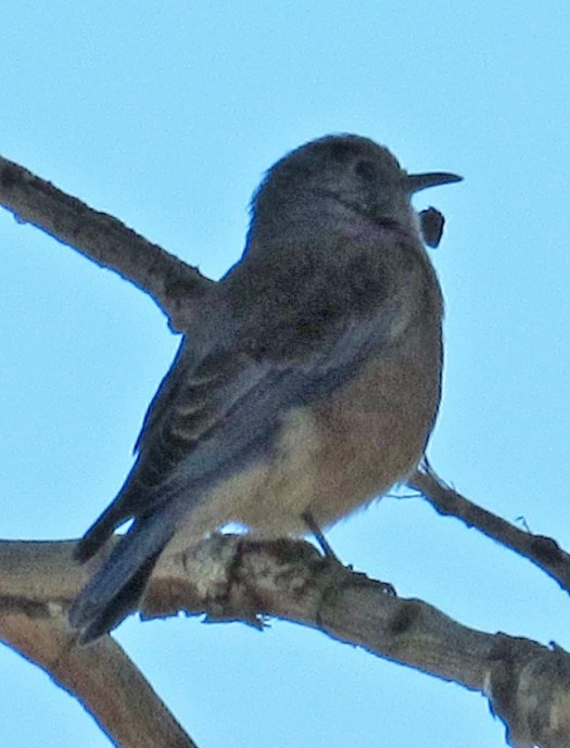 I had to utilize photo editing software to make the blue bird visible in some of the photographs.