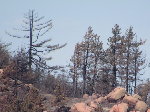 The top of a hill with boulders and pine trees.