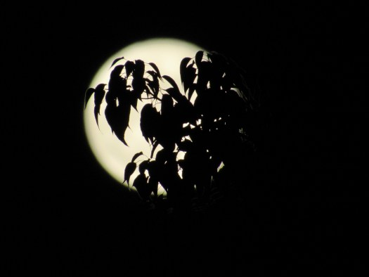 I captured the silhouette of a tree branch over the full moon.