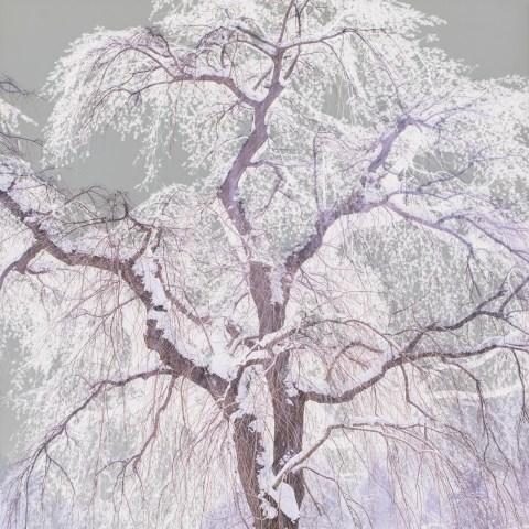 桜 © Tadayuki Naitoh