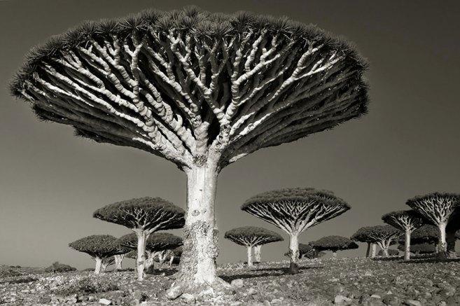 Деревья в интерьерном дизайне