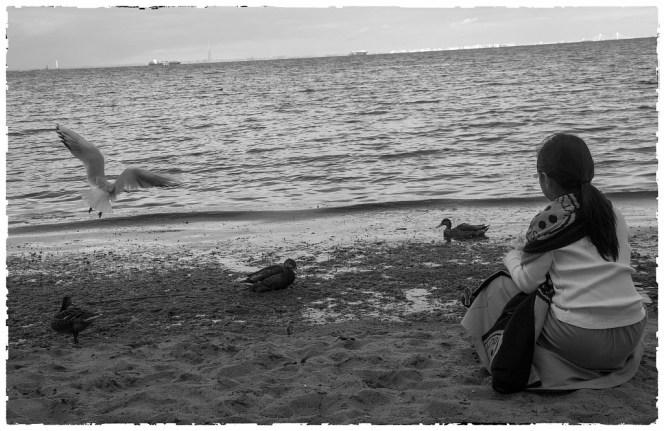 Финский залив. Петродворец. Кормление жадных бакланов