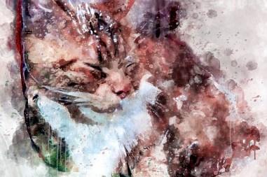 Зоология_Дремный кот_1