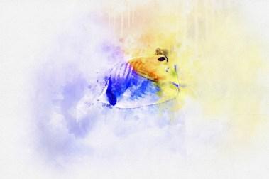 Рыбы в авторском изображении для оформления интерьеров зоомагазина