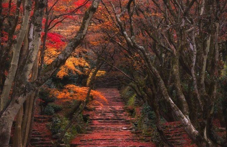 Японская осень koyo в парке Наро