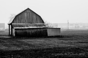 Barn in the fog - not a hint of ice.