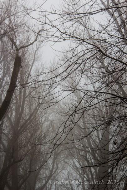 fog-6659