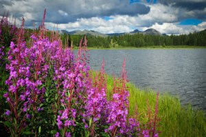 Andrews Lake is a very nice location for photography, fishing, and a bit of boating too (no motors please). You can often find fireweed and other colorful wilds along the lake side. ©Kit Frost