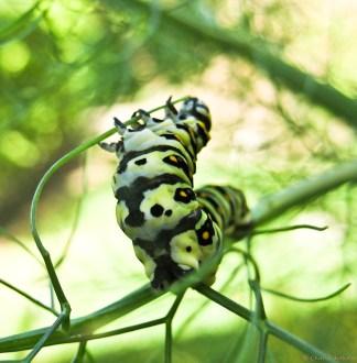 Papilio.02-9841