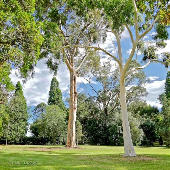 Home.Exchange.Melbourne.BotanicalGardens