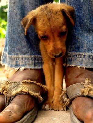 Haitian Puppy by Wilson Slader
