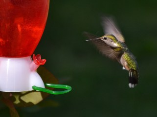 Coming in for a Landing by Becky DeSantis