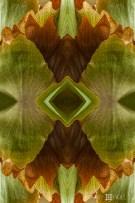 Fern grotto: version 1. Photo of staghorn fern leaves, Cabinas las Manzanas, Copey de Dota, Costa Rica.