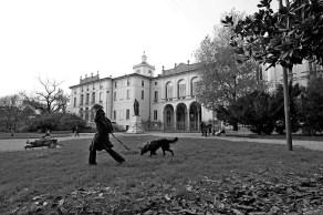elisa villa cani a milano 021