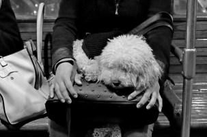 elisa villa cani a milano 04