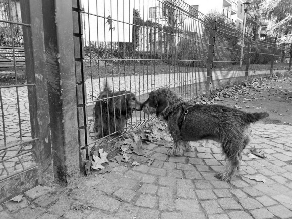 elisa villa cani a milano 06