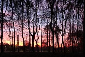 tramonto al forlanini daniela loconte foto 4