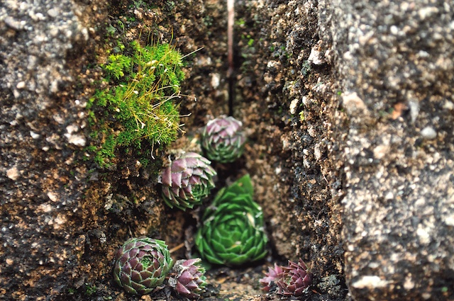 Tiny plants and moss in the crevice of a rock wall