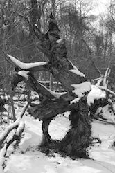 Roots un-Dodged