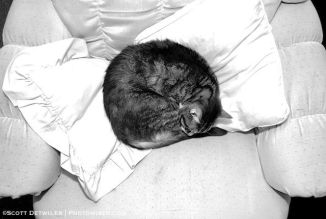 Cat curled in chair, in black and white