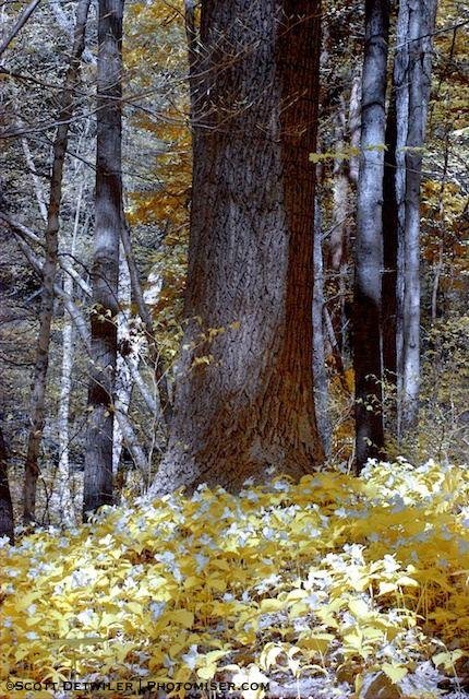 False Color Trillium Trail