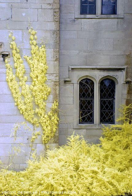 Hartwood Mansion Ivy WIndow, false color IR