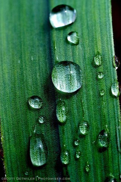 Grass Blade Raindrops