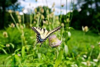 Butterfly in Context
