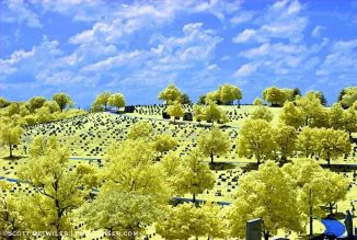 Cemetery, False Color IR