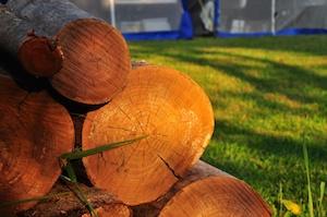 Evening Firewood