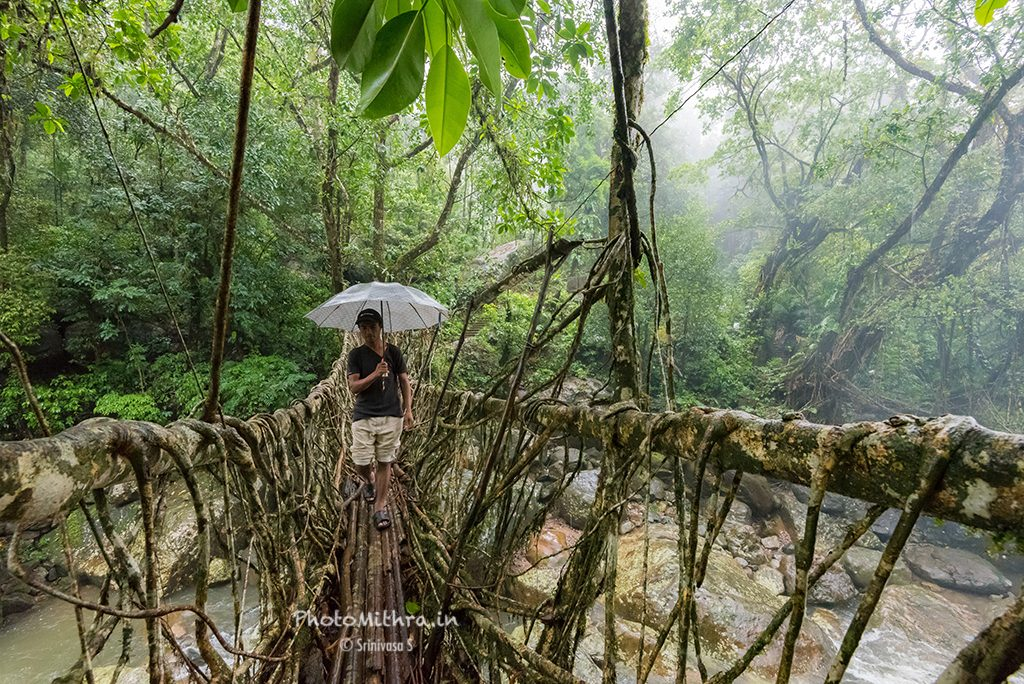 Crossing a root bridge in rains