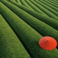 Geometry on tea fields Japan