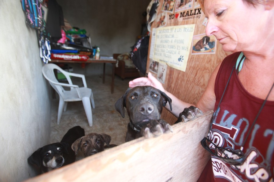 One of the volunteers from S.O.S provides a head rub to one of the dogs kept separated due to needing special care.