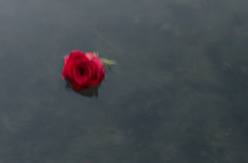 floating rose