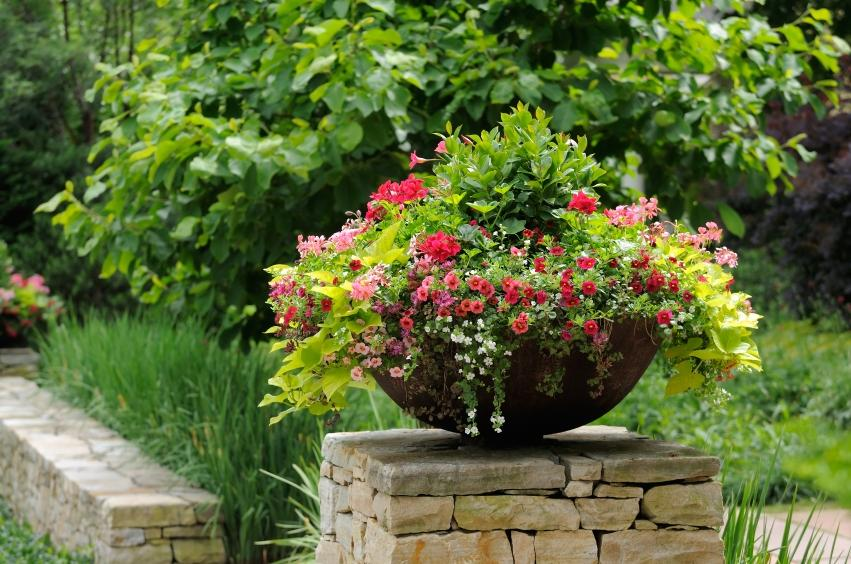 Better Homes And Gardens Container Garden Ideas