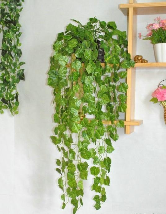 Best Houseplants Low Light