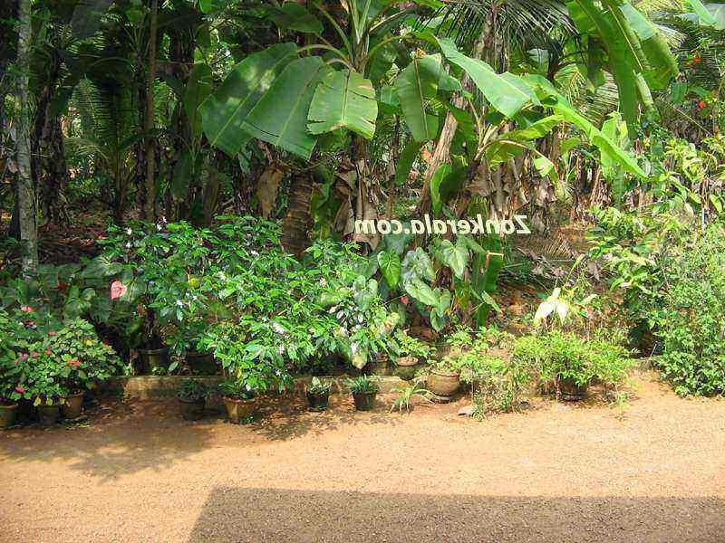 Kerala Home Garden Plants